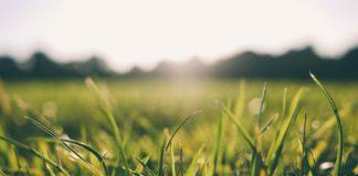 Rasensprengen bei Sonne